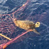 Trappola per pesci e imbarcazioni: sequestrata a Reggio una rete illegale di 5 km - FOTO