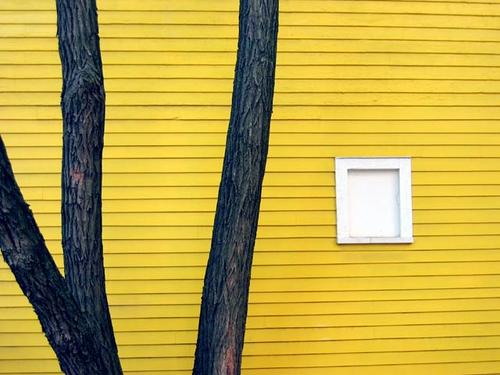 BostonCambridge Architecture Yellow wooden house with trees