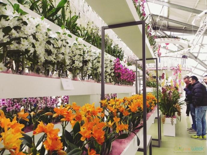 orchid show in Beatrix Pavilion