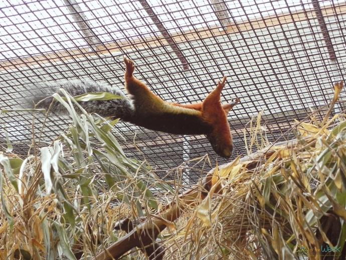 life at Artis Zoo