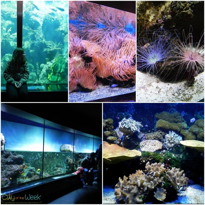 aquariums at Artis Zoo Amsterdam