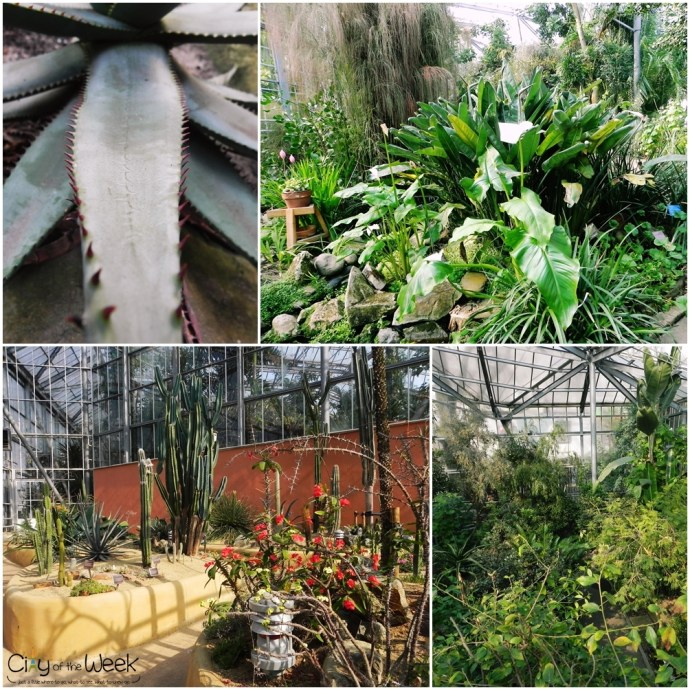 Tropical and Subtropical Greenhouse - De Hortus Botanical Gardens