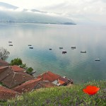 poppy and Ohrid Lake