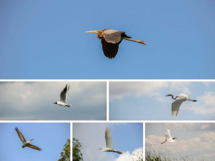 Birds of the Danube Delta