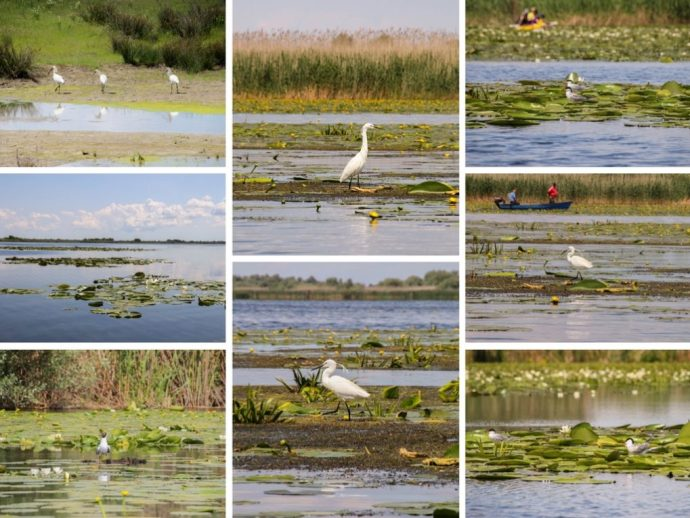 Birds of the Danube Delta