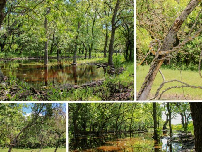 Letea Forest, Danube Delta, Romania
