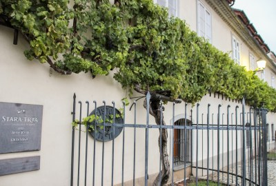 Old Vine | Sightseeing in Maribor