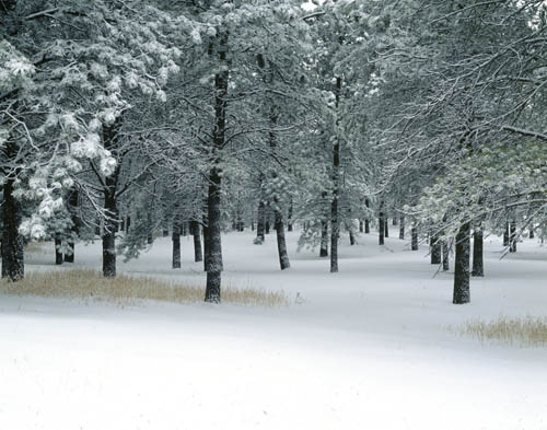 Image result for images Winter in Colorado