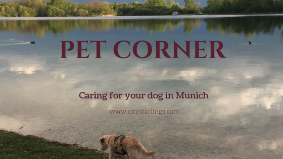 Caring for your pet in Munich