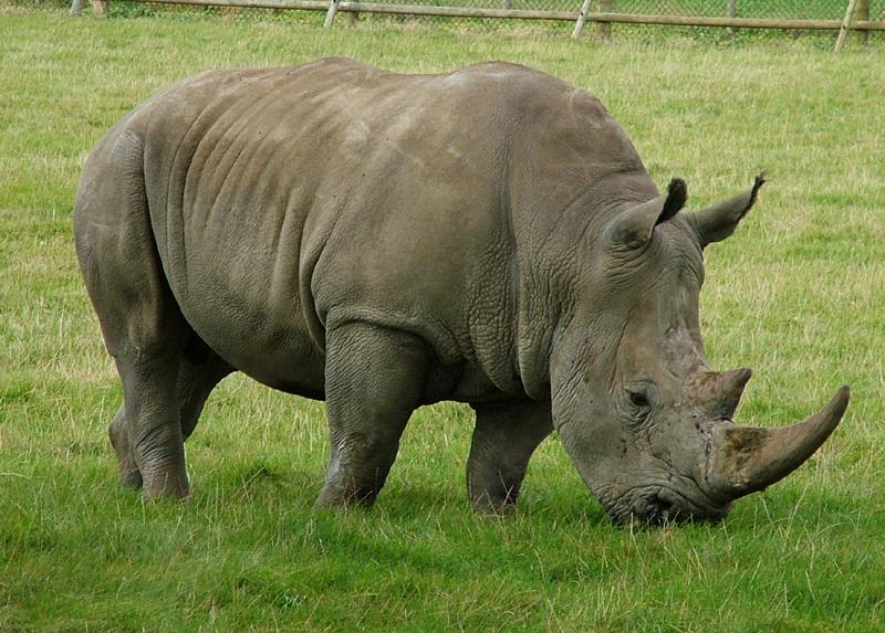 https://i0.wp.com/www.ciudad17.com/Naturaleza/wp-content/uploads/rinoceronte.jpg