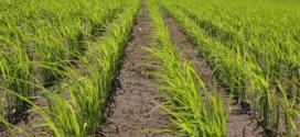 Gobierno Bolivariano adjudicó 1 millón 300 mil hectáreas de tierras en los últimos seis meses