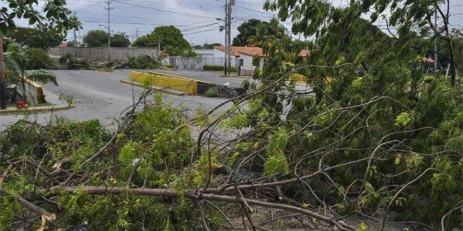 #ECOCIDIO Leobardo Acurero: Deforestar para hacer barricadas no es una lucha justa es innoble
