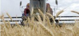 Este viernes arribará al país segundo barco con 30 mil toneladas de trigo proveniente de Rusia