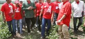 Comuna 'El Maizal': producción larense en manos del Poder Comunal