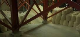 EN DEMASECA SARARE | Descompuestos 50 mil kilogramos de harina maíz por orden patronal (+FOTOS)