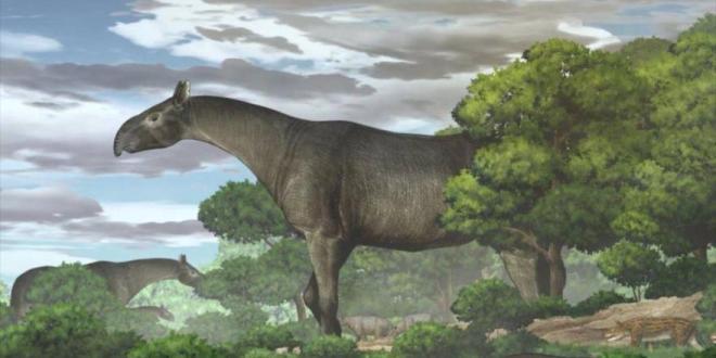 Más alto que jirafas: Descubren en China mayor mamífero terrestre