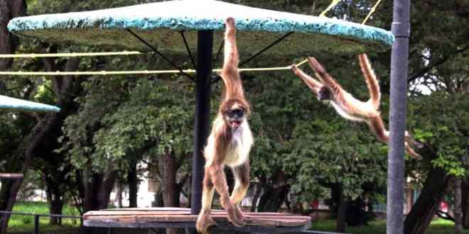 Parque Zoológico y Botánico Bararida: Centro de recría y procreación