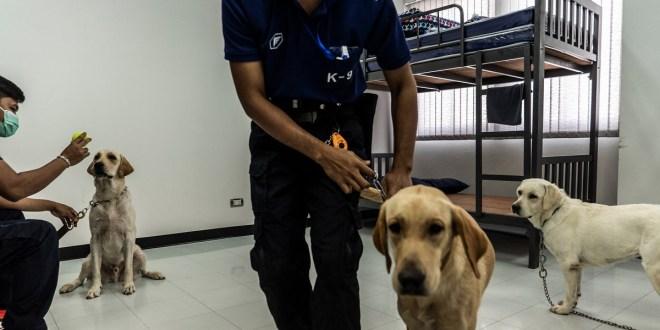 Unidad canina ayuda en la detección de covid-19 en Tailandia