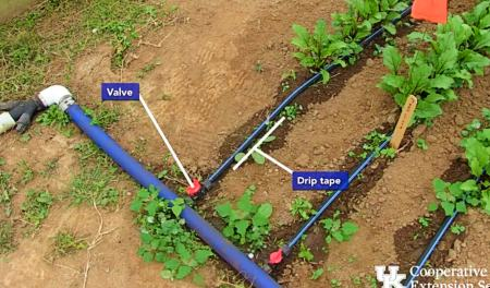 Advantages of drip irrigation   Layout systems of Drip irrigation