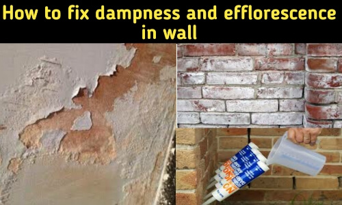 how to fix dampness and efflorescence in wall
