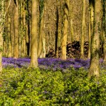 """BLUEBELLS, THE MASTERS' CORRIDOR AND  THE CLAIM FORM:  """"A DRY AND UNLOVELY CROP OF PROCEDURAL SERVICE ISSUES"""""""