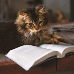 SETTING ASIDE AN ORDER ON COURT'S OWN INITIATIVE: A REDETERMINATION OF THE  MATTER AND NOT SUBJECT TO TIBBLES PRINCIPLES