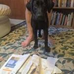 """""""THE DOG ATE MY HOMEWORK"""" EXCUSE DOESN'T WORK WELL IN COURT: THE JUDGE MAY HAVE BEEN WRONG ABOUT THE WAY """"SIGNED FOR 1ST CLASS"""" OPERATED BUT THEY WERE RIGHT TO REFUSE RELIEF FROM SANCTIONS: COURT OF APPEAL DECIION"""