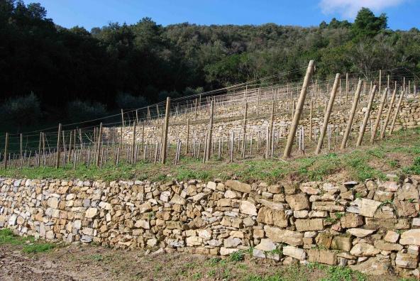 AllElba entra in scena Valle di Lazzaro  Civilt del bere