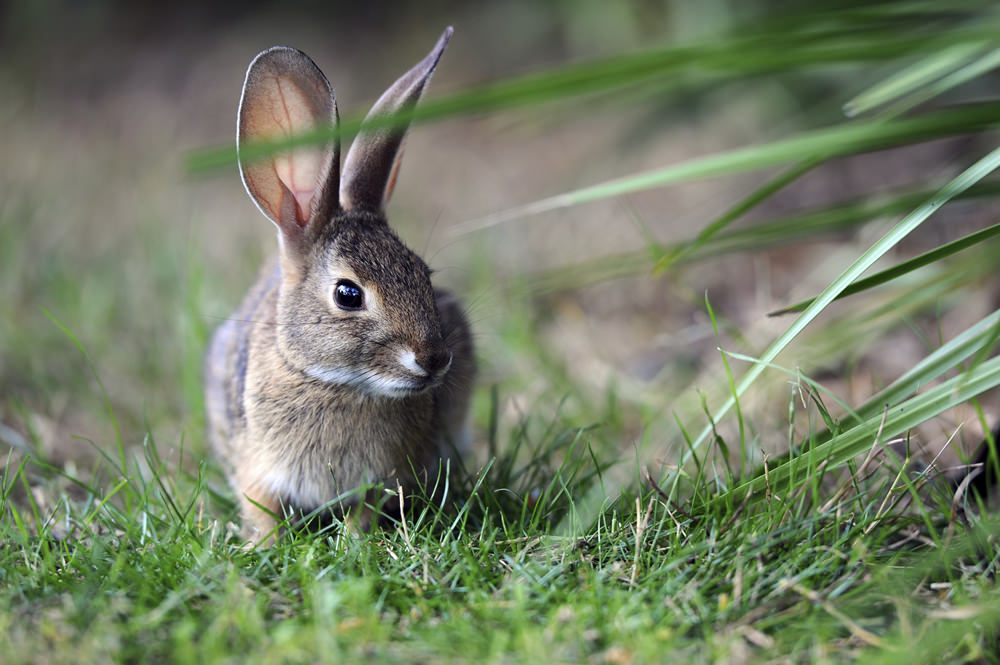 learn about rabbits and