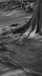 cjparis_2015_01_Roots_03