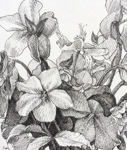 Helleborus, fineliner op papier, 12.5x11 cm, 2019