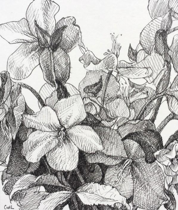 Helleborus, fineliner op papier, 15x13 cm, 2019