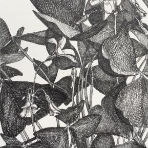 Klaverzuring, fineliner op papier, 15x13 cm, 2019