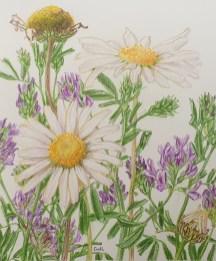 Margriet en wikke, kleurpotlood op papier, 12x10 cm, 2020