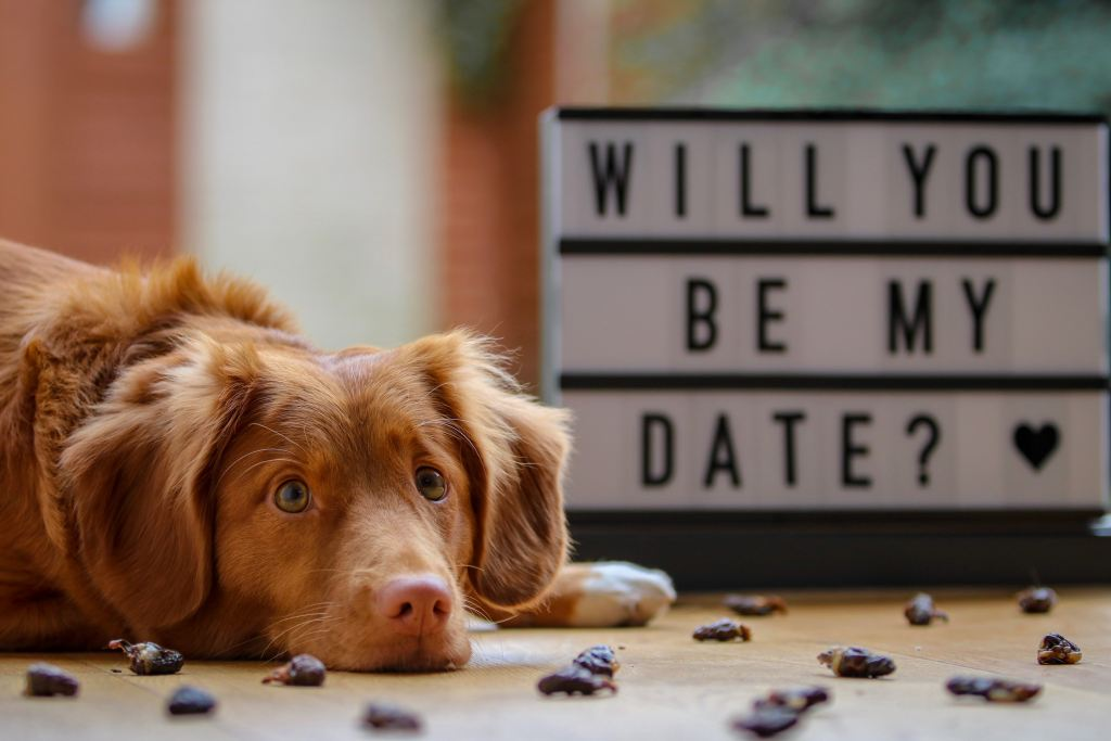 Dog with Will you be my date sign