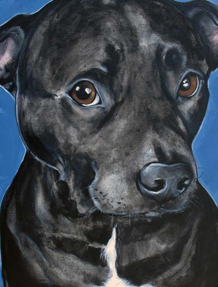 Pet portrait of Lucky the pitbull