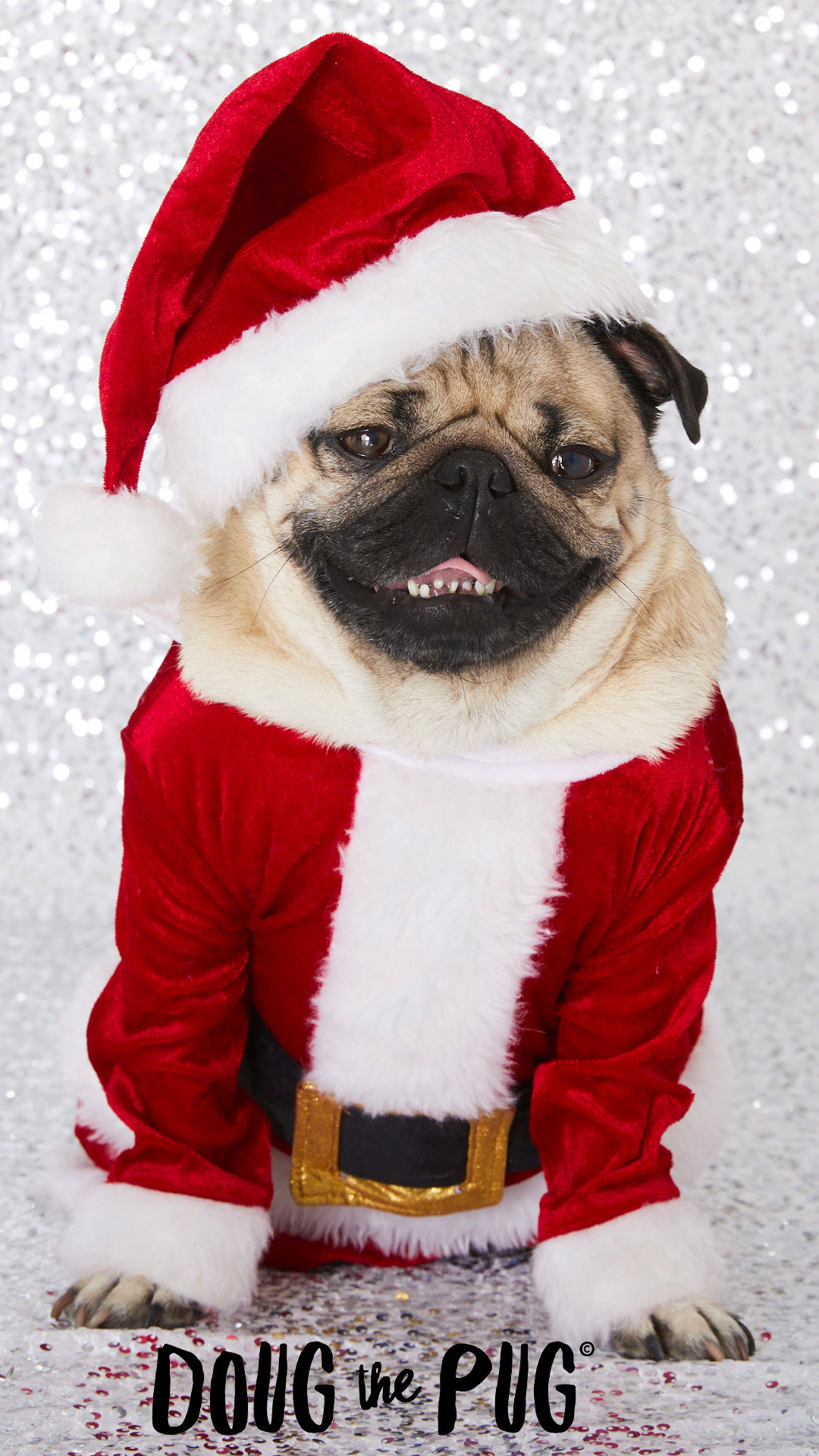 First Iphone Wallpaper For Iphone X Free Doug The Pug Christmas Wallpapers Clairesblog