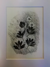 Hawthorn, monotype, unique, 12x17cm, £5