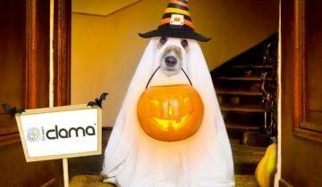 promo halloween clama