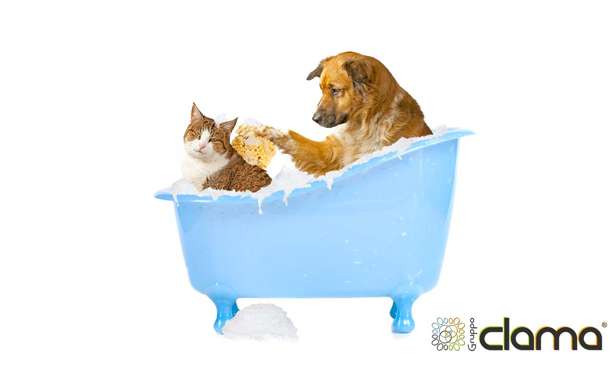 Promo cane e gatto a casa