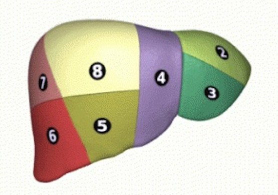 Liver_04_Couinaud_classification_animation-300x300