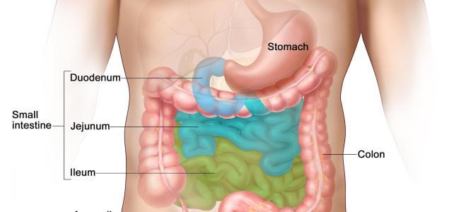 GI Cancer and Maintaining the Necessary Nutritional Health