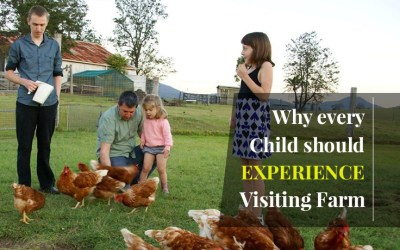 Why Every Child Should Experience Visiting a Farm