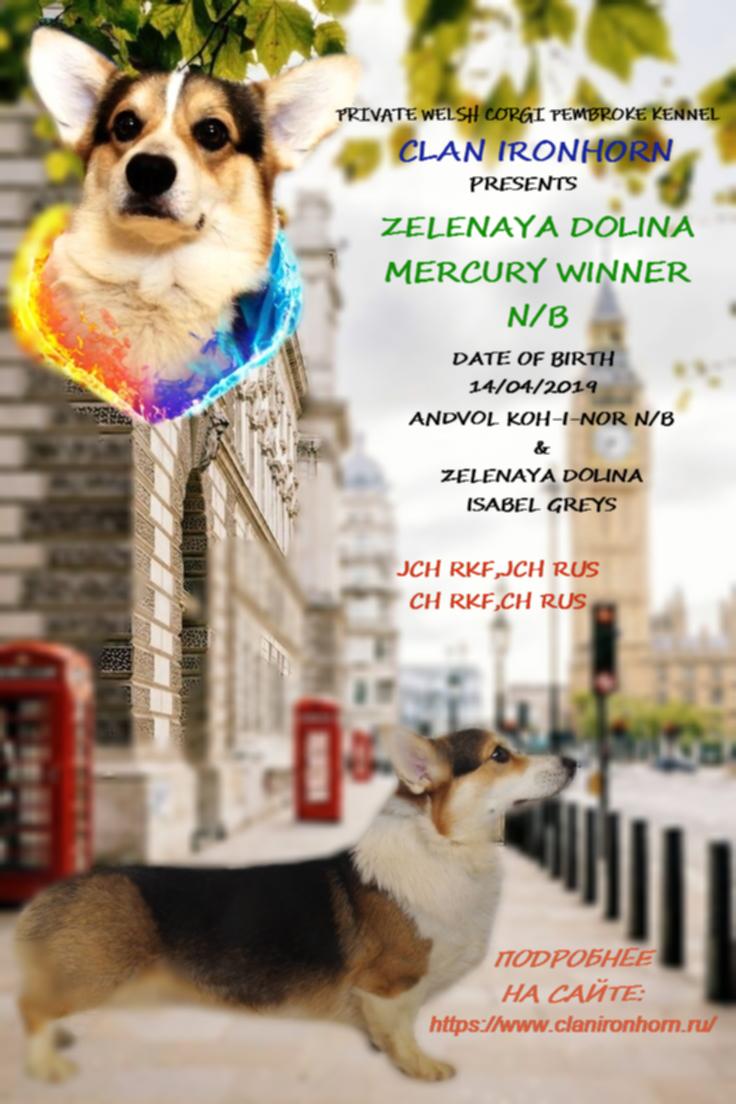 ZELENAYA DOLINA MERCURY WINNER N/B