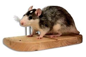 Superbe Planche de siège pour petits rongeurs comme souris, rats, hamsters, tamia avec fixations Cage