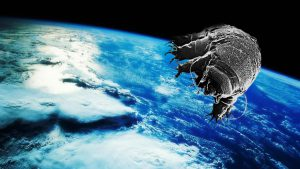 Tardigrades in space