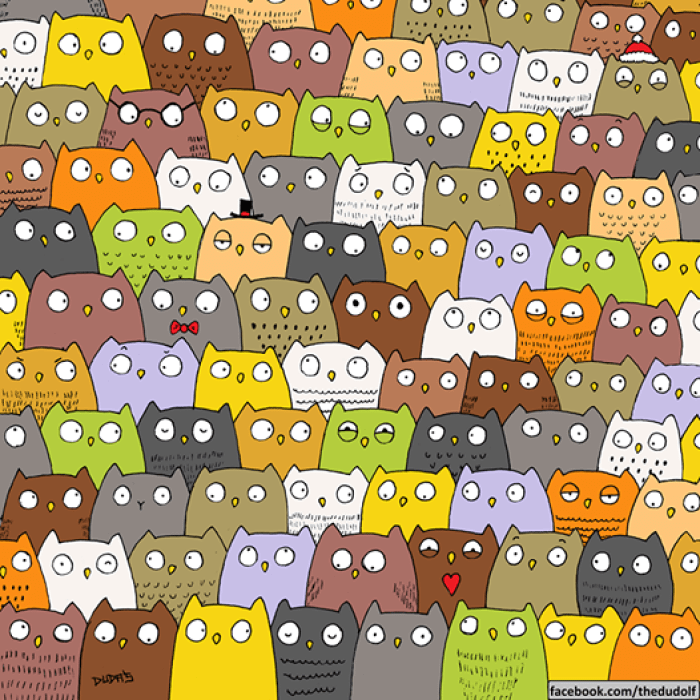 cat among owls