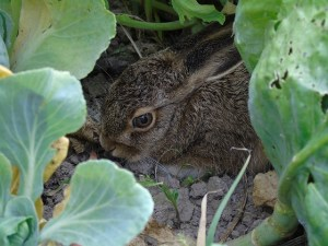 Animal Spirit Guides: Rabbit