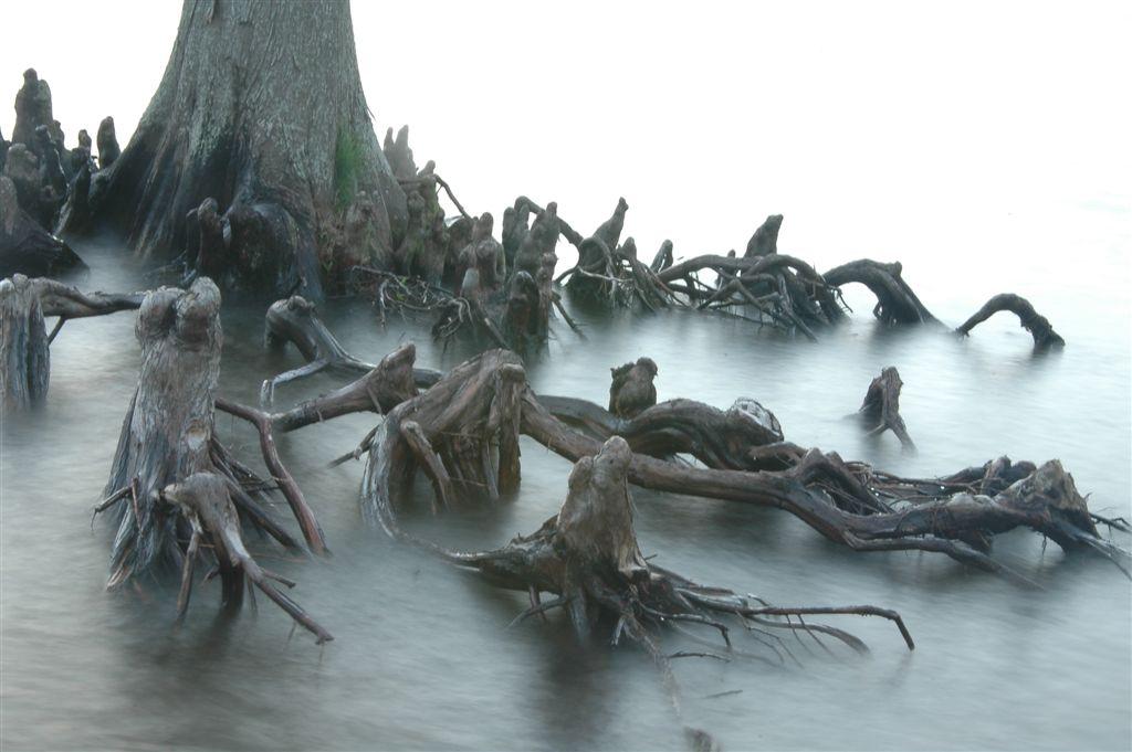 rootscreep1