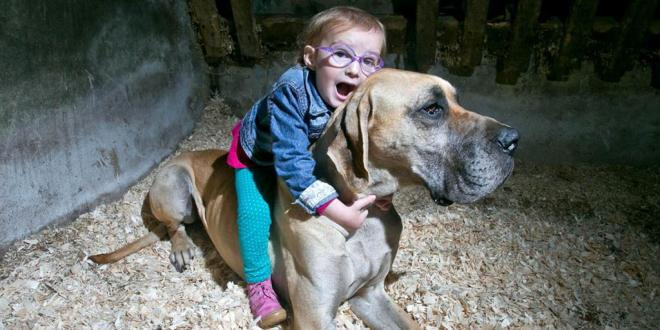 Great Dane invades to protect Brianna